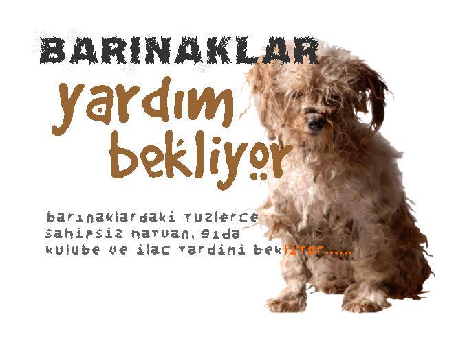 Bakinsky Yard, Syktyvkar: restoran hakkında herşey 67